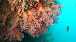 School of fish on background colorful corals underwater in sea of Maldives Footage
