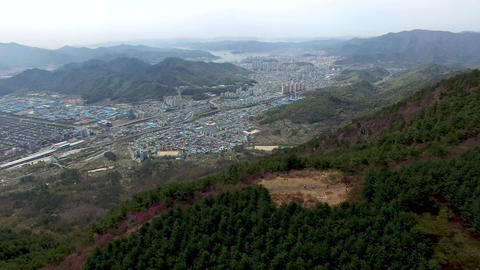 Cheonjusan Mountain Jindallae Azalea Flower Blooming 03 Footage