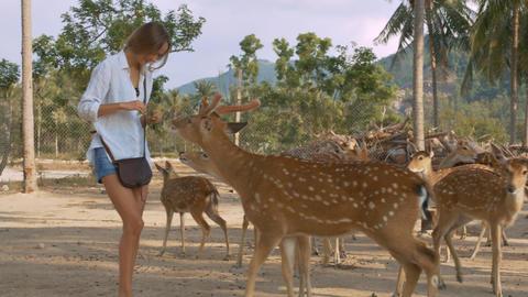 Girl Feeds Deer in National Park against Plants Archivo