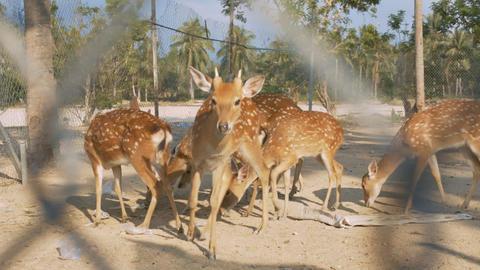 Baby Deer Eat Food in National Park against Palms Image