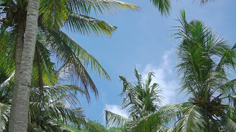 Leaves of Palm Trees on the Background with Blue Sky Footage