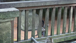 Funny monkey family on a background of wooden fence in Indonesia Footage