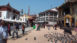Pigeons in Durbar Square and its surroundings n Nepal Footage