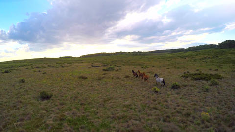 Drone chasing Horses in the alpine forest Archivo