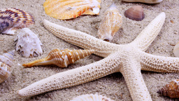 Rotating tropical starfish and seashells Footage