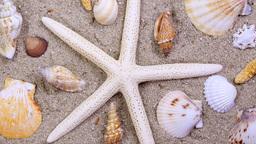 Rotating tropical starfish and seashells Footage