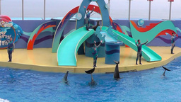 Participants of the show with the dolphins bid farewell to the audience Archivo