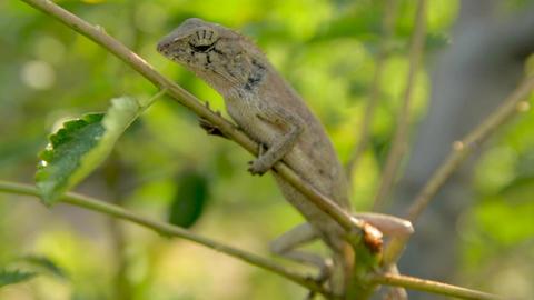 Animal lizard nature wild 영상물