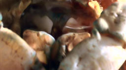 Crab eat shrimp close up underwater on seabed of White Sea Russia Footage