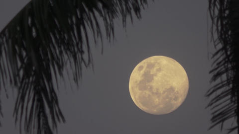 Beautiful fantasy tropical beach, full moon. Maldives video Archivo