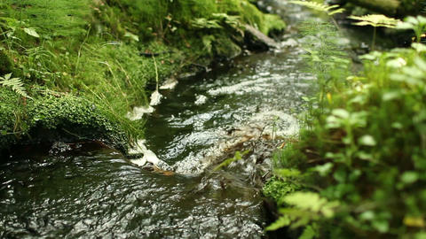 stream in lush green forest Footage