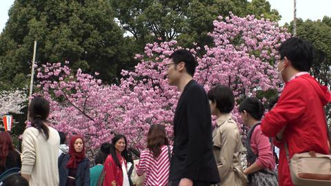 TOKYO, JAPAN - APRIL 2018 : CHERRY BLOSSOMS in Tokyo 영상물