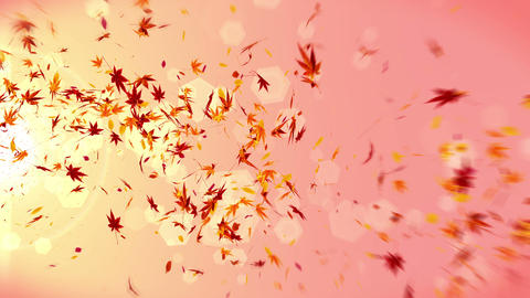 Autumn Leaves Falling on Yellow Background, Maple Leaf, Loop Glitter Animation CG動画