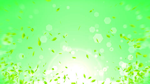 Fresh Green Leaves Falling on Green Background, Loop Animation Animation