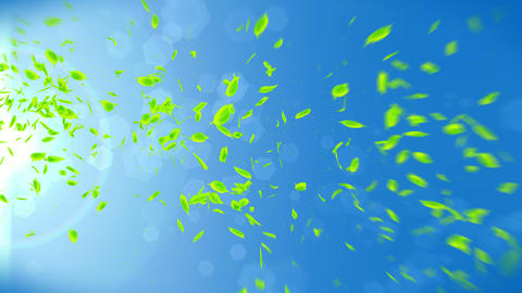 Fresh Green Leaves Falling on Blue Background, Loop Animation Animation