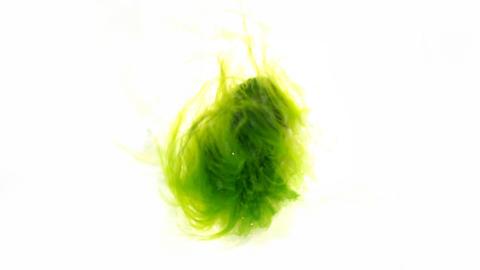 The algae is green hair nymph Loreley Footage