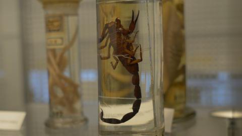 Scorpion at Biology Lab Live Action