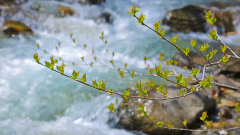 Stormy stream on the mountain river on a sunny day ライブ動画