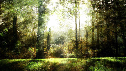 Magical fantasy nature background Animation