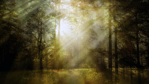 Magical fantasy nature background Animation