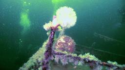 Scuba diver near rusty wreckage shipwreck on beach of White Sea Russia Footage