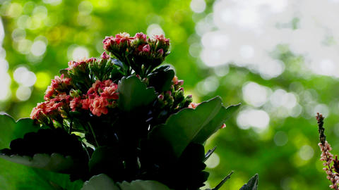 Red And Green Flowers With Green BG Live Action