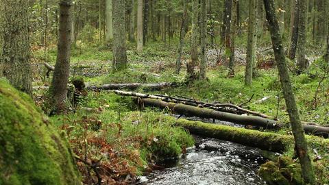 stream in green forest Archivo