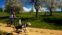 Girl on a bycicle number 45 running along with dog in slow motion GIF