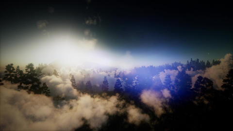 aerial over clouds in pine tree highland forest Archivo
