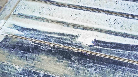 Workers Gather Agricultural Product Salt on Ponds GIF
