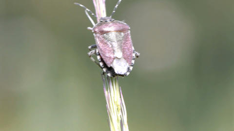Forest Bug Stock Video Footage