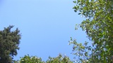 HD - Sky And Trees 03 stock footage