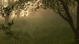Misty And Warm Morning stock footage