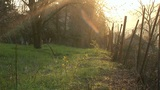 Rural Backyard 02 stock footage