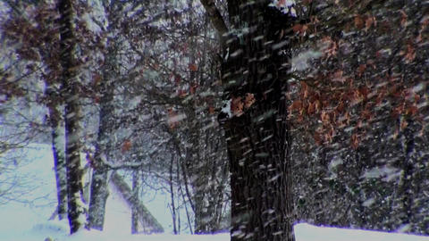 Winterforest Version 2 dark Stock Video Footage