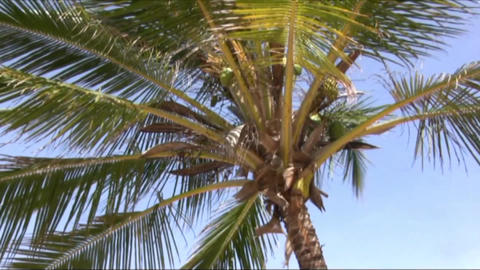 Palms Stock Video Footage