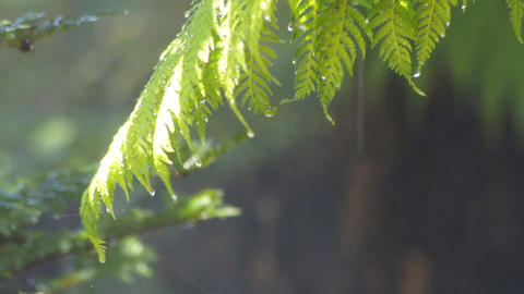 Tropical forest rain Stock Video Footage
