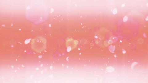cheery blossom Defoucus Light 01B Stock Video Footage