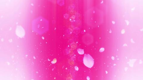 cheery blossom Defoucus Light 02C Stock Video Footage