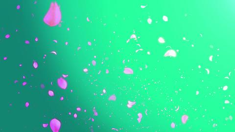 Cheery Blossom Light 01D Stock Video Footage