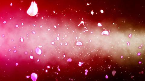 Cheery Blossom Light Cloud 03C Stock Video Footage