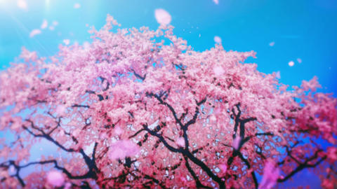 Cheery Blossom Tree 01A Animation