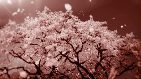 Cheery Blossom Tree 01C Animation