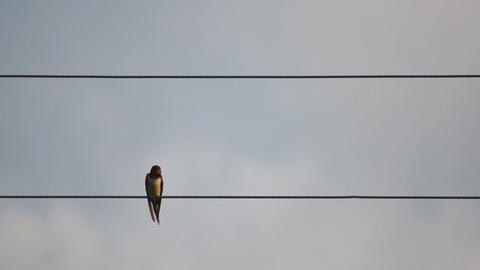 Single Bird On Wire Stock Video Footage