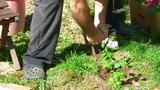 Doing Gardening, Digging stock footage