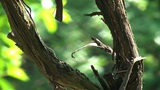 Old Vine Branch 01 stock footage