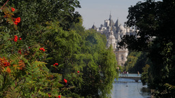 Classic static shot of Whitehall as seen through the trees of St James Park and  Footage