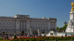 Pan from Buckingham Palace to the Victoria Memorial across a bed of red flowers. Footage