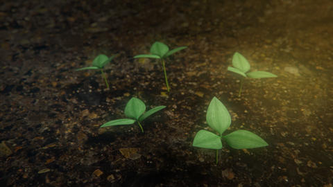 Seedling trees sprouting from the ground Footage