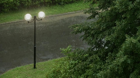 Torrential Rain and Gale-force Wind in the Summer Park Footage